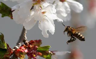 Beestoflower